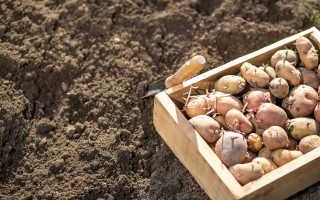 Увеличиваем урожай картофеля
