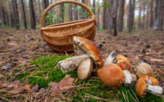 Хранение и приготовление грибов на зиму