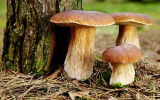 Прежде чем отправиться по грибы