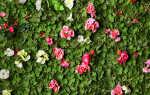 Растения и метод гидропоники