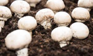 Где искать грибы