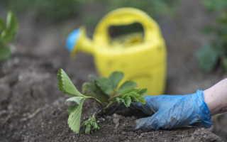 Выращивание клубники(земляники)