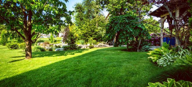 Выращивание калины на садовом участке (на даче)