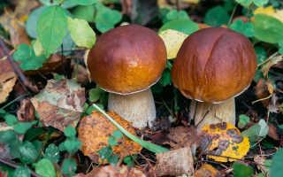 Выбираем день для собирания грибов